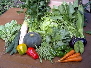 らでぃっしゅぼーや 夏野菜 効果