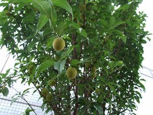 果樹剪定の本選び