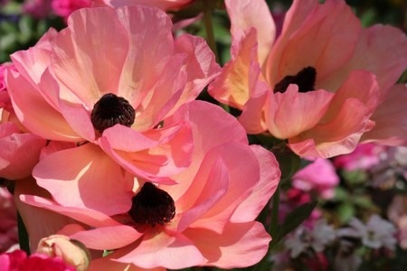 Anemone (4).jpg