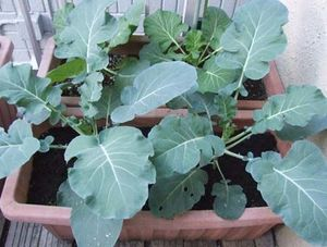 プランターサイズ 野菜栽培
