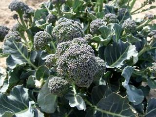 12月の家庭菜園作業 防寒対策と腐葉土・堆肥作りを