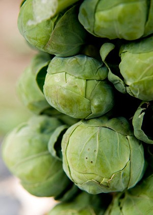 Brussels20sprouts1.jpg