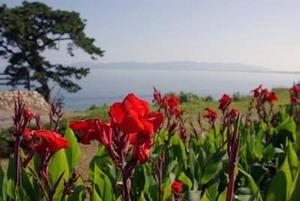 夏の花 ガーデニング