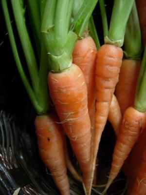 Carrot (13).jpg