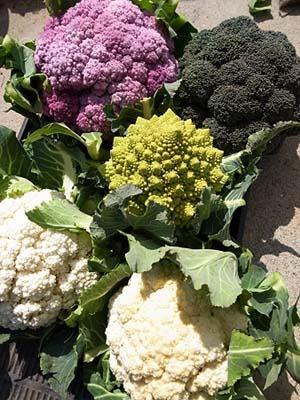 Cauliflower1 (1).jpg