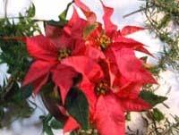 Christmas wreathC.jpg