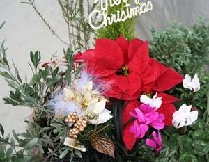 Christmas yoseue.jpg