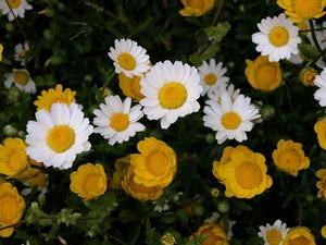 冬に長く咲く花 画像付き