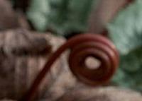 Cyclamen (5).jpg