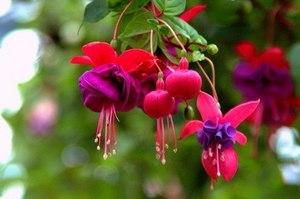 春に長く咲く花 画像付き