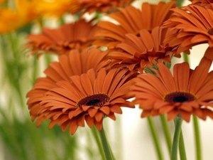 4月の園芸作業 鉢花|日光にあて株をじょうぶに