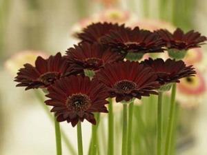 寒さに強い花