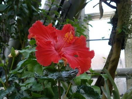 Hibiscus01.jpg