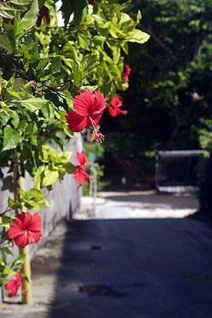 Hibiscus010.jpg