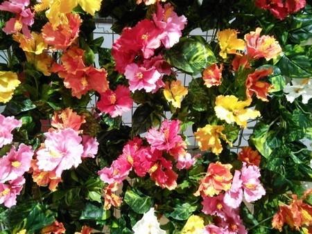Hibiscus014.jpg