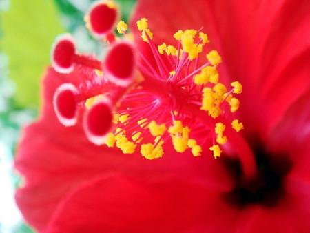 Hibiscus033.jpg
