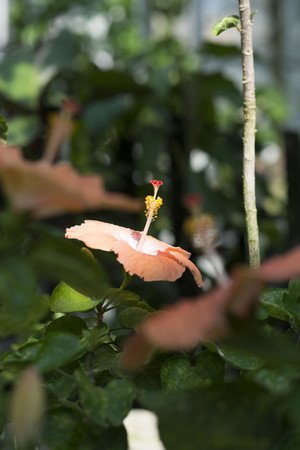 Hibiscus35.jpg