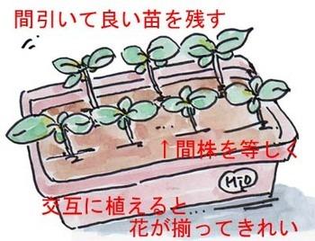 Himawari-Planter.jpg