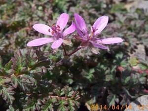 この花の名わかりますか? 画像有
