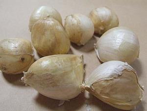 ジャンボニンニクの育て方、栽培方法