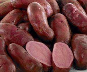 ジャガイモの種類と特徴 写真入り2