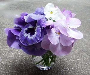 パンジー 切り花