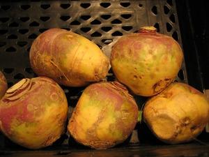 パースニップのプランター栽培|煮込み料理に美味な野菜