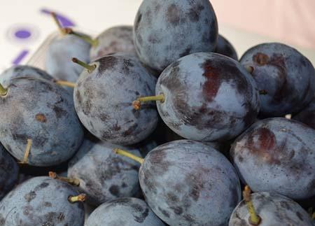 Prunus (2).jpg