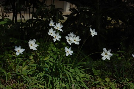 Spring star (1).jpg