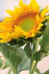 暑さに強い花
