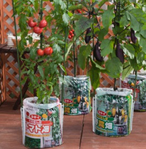 ミニゴボウの袋栽培|耕す労力や収穫の手間が省けます