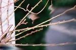 杏の結実と利用方法