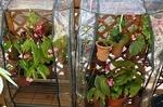 ビニール温室の自作と購入