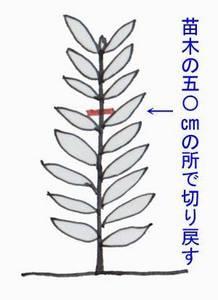 biwa-sente010.jpg