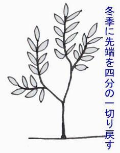 biwa-sente011.jpg