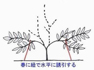 biwa-sente012.jpg