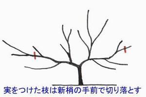 biwa-sente013.jpg