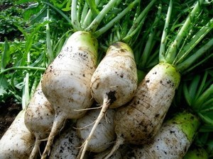 9月の家庭菜園作業 時期を逃さずに次々栽培