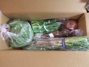 有機栽培野菜の宅配について|数社をお試しで比べてみましょう