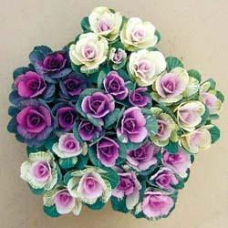 flowering kaleC.jpg
