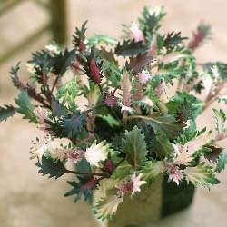 flowering kaleD.jpg