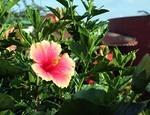 6月のガーデン・園芸作業と家庭菜園作業