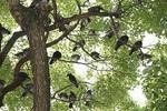 鳥退治・鳥害防止