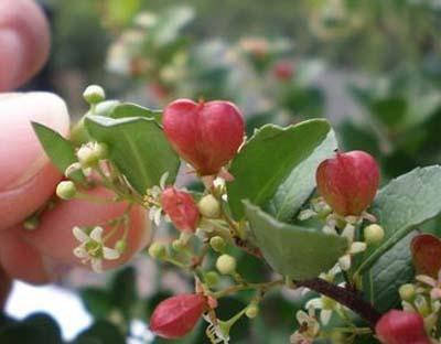 heart-treeB.jpg