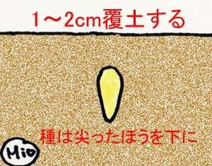 himawari-tanemaki.jpg