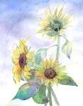 ヒマワリ 花の絵を描く