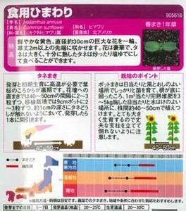 himawari (13).jpg