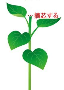 himawari (14).jpg