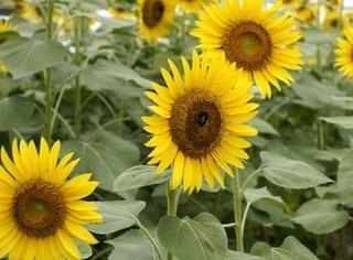 5月の園芸作業 鉢花 |タネまき、植え替えの季節
