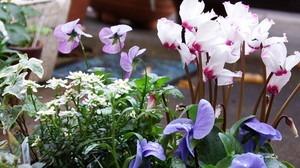 冬の花 寄せ植え